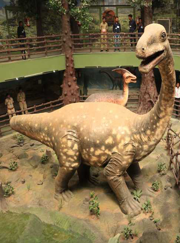 Kach fossil Park of Kutch Travels