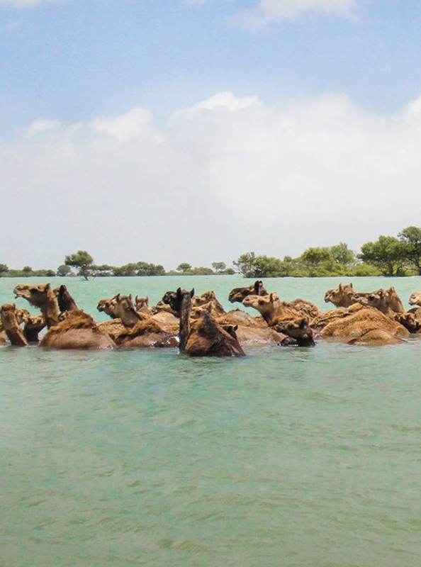 Mangroves Island of Kutch Travels